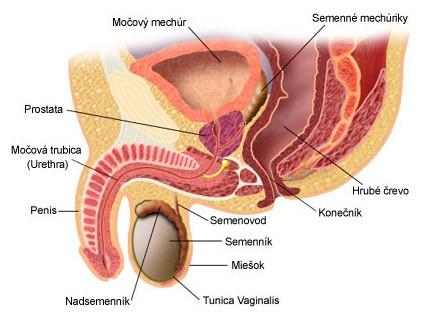 prostaty výstrek trubice eben dospievajúci análny videá